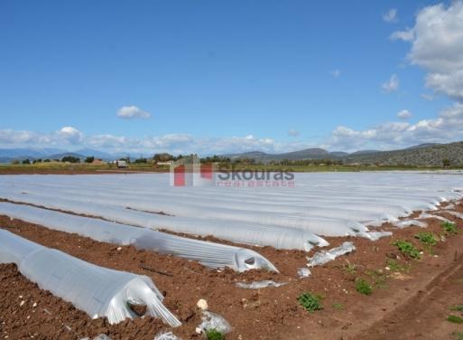 Iria,  Asini Terrain Agricole 30.000 m2